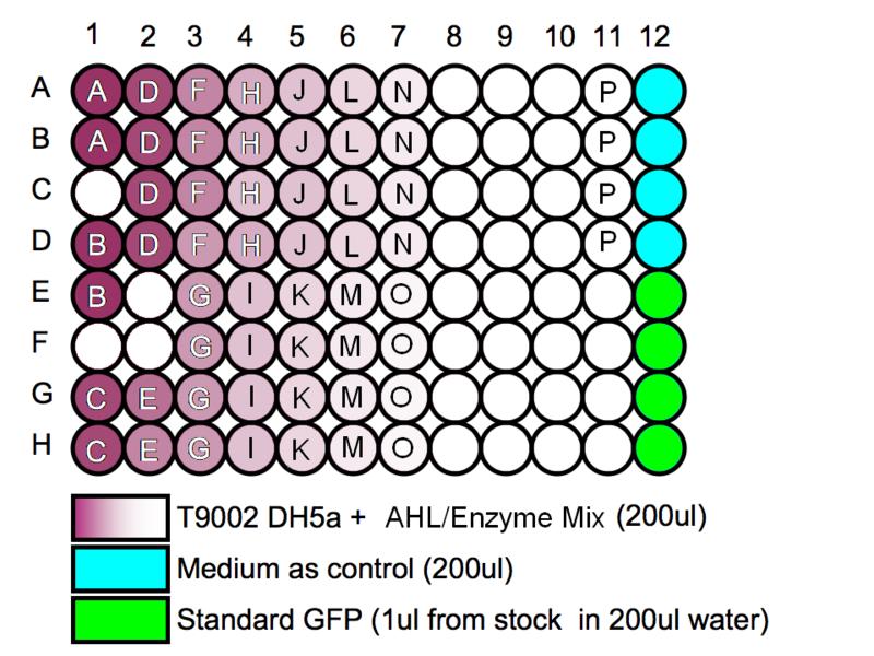 File:IGEM IMPERIAL Biosensor 96WellPlate.png