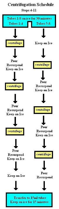 Centrifugation schedule.jpg