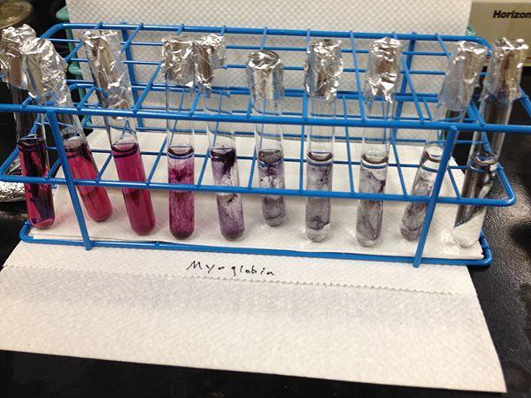 Myoglobin AuNPs20131206.jpg