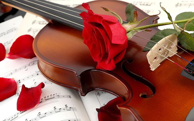 File:Violin-red-rose.jpg