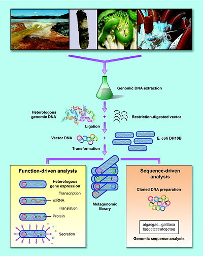 Schematic for the acquisition and analysis of metagenomic information