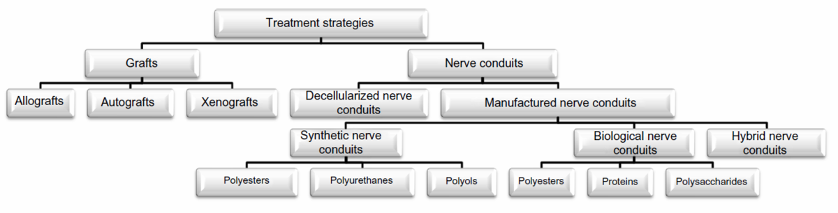 Various treatment strategies for nerve injuries in the peripheral nervous system [9]