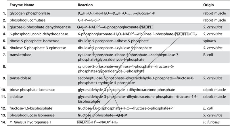 File:Enzymes4.jpg
