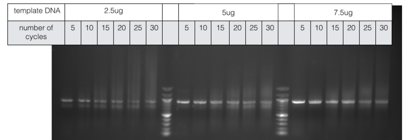 File:2014-EchiDNA-LAB-BOOK-EXPERIMENT 3-shit Fig7.png