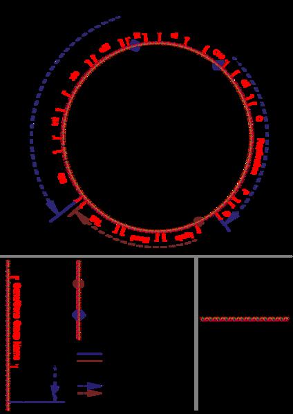 File:Lambda genome.jpg