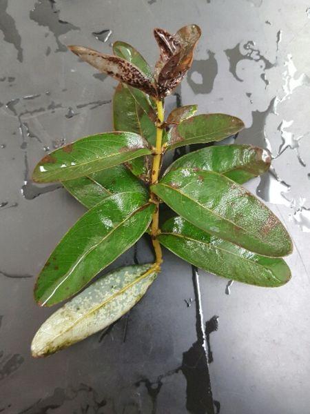 File:Plant 3.jpg