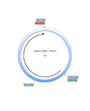 System 2 (plasmid).jpg