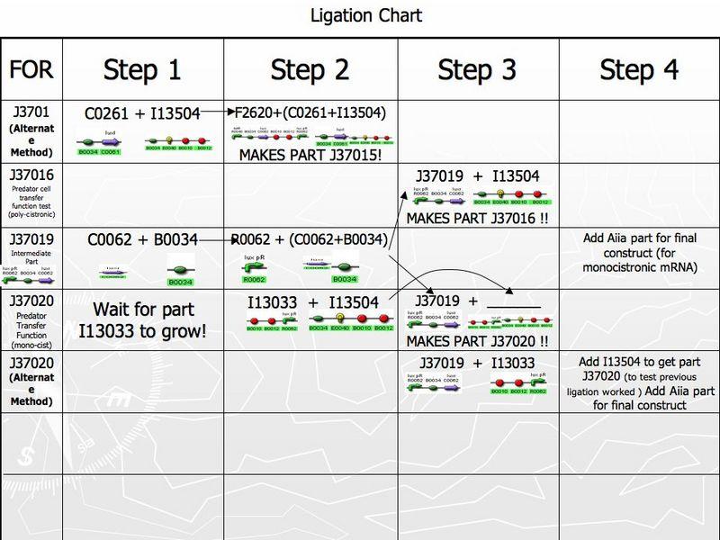 File:IGEM Imperial Ligation Chart.jpg