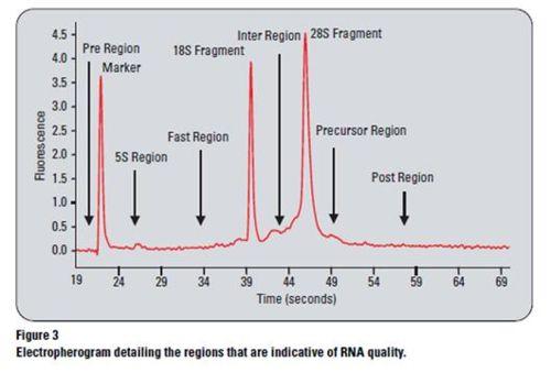 RIN RNA.JPG