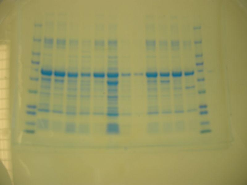 File:S12 M2D7 WF Red-Blu.JPG