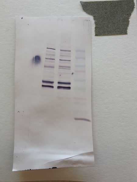 File:S14 M2D4 WF-Sil.JPG