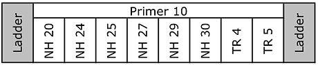 20110111 GelSchematicTR10.jpg