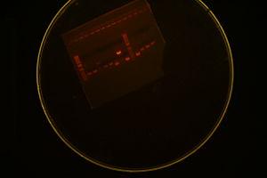 Colony PCR 2245+1091 First try.JPG