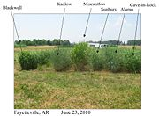 Field trials of different switchgrass varieties