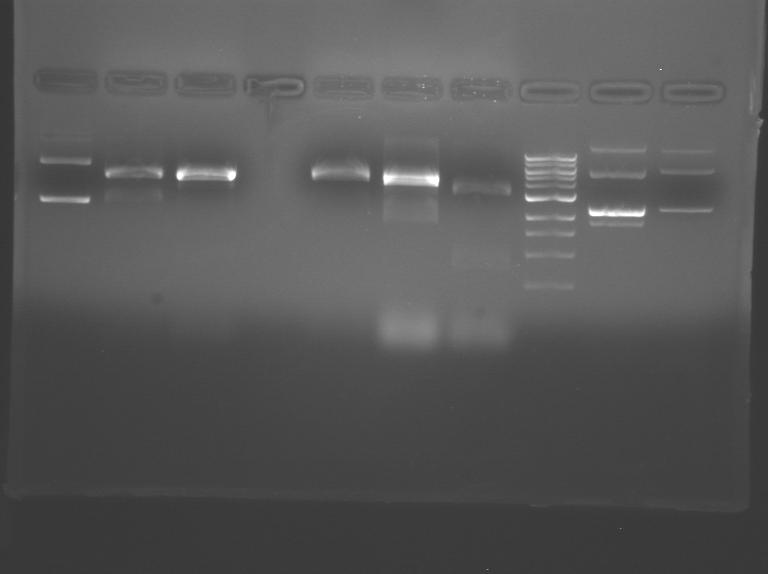 File:S10 M2D5 TR gel-Purple.jpg