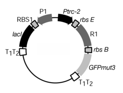 Figure 1: Biological design of a genetic toggle switch