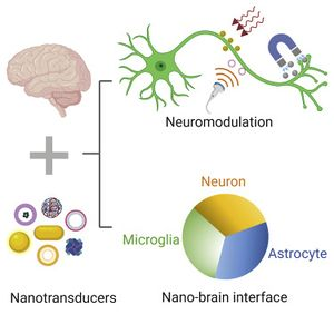 Xl neuromodulation.jpg