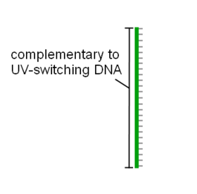 Simplified image of blocking DNA