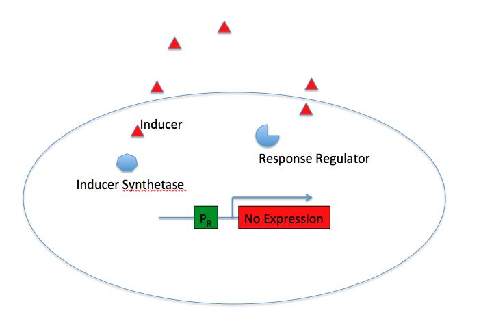 Gram-negative QS System - Off