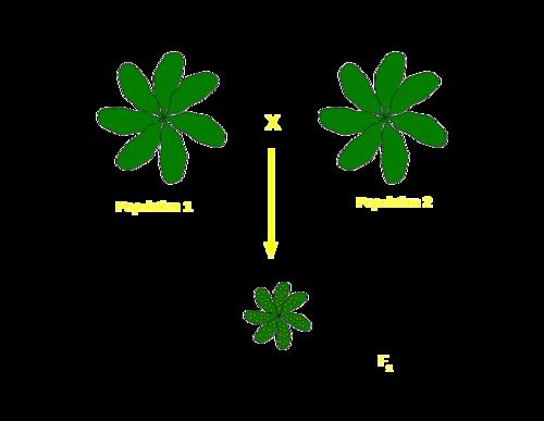 Hybrid schematic.png