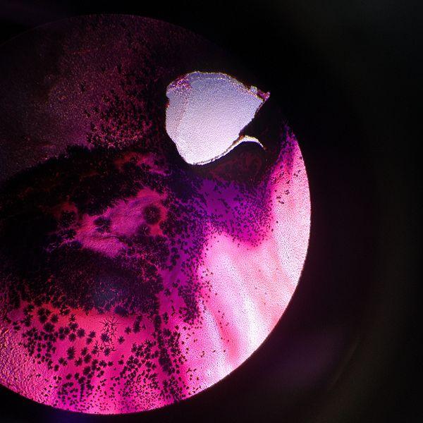 File:Bacteria1NS.jpg