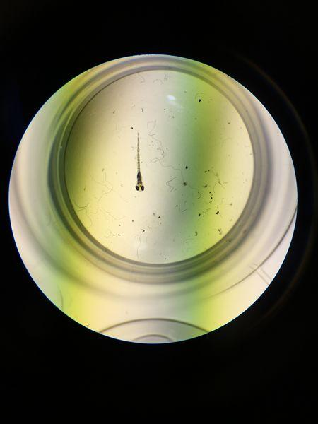 File:ImageLHCJPG. Bio210 Figure 1