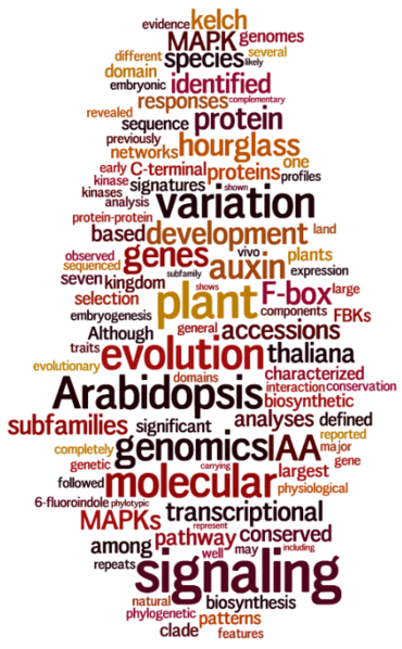 Image:Wordle 03-13.png