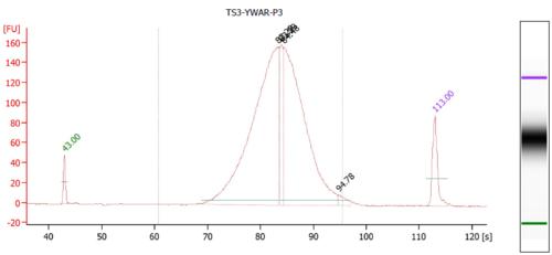 Bioanalyzer YWAR P3.PNG