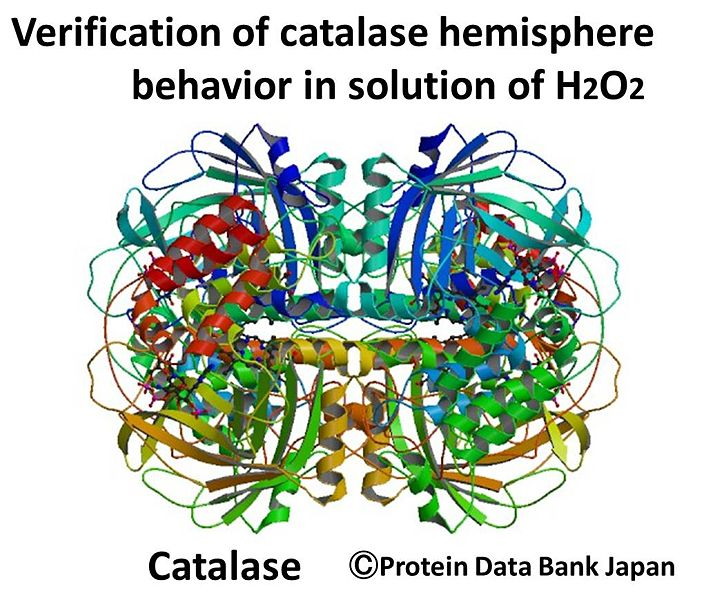 File:Catalase verification.jpg