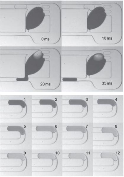 File:Dilution figure for microfluidics.JPG