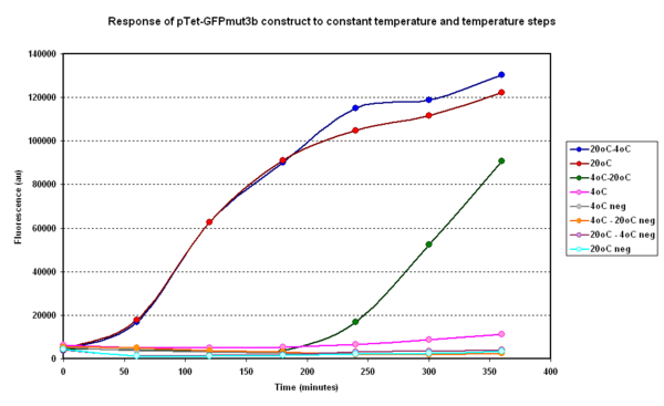 Fig.1.1:Average fluorescence over time for two samples at constant temperatures of 4&degC and 20°C and two with a temperature step ( 4-20°C and 20-4°C)