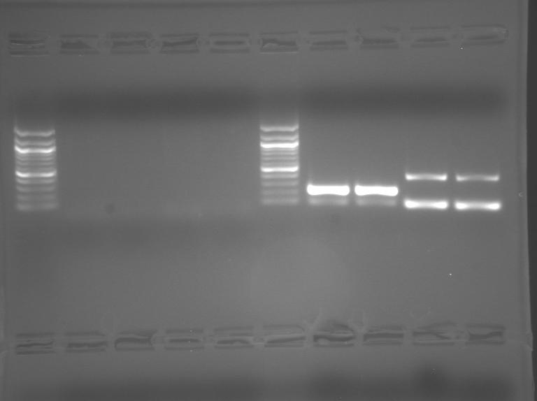 File:S10 M1D5 TR Purple.jpg