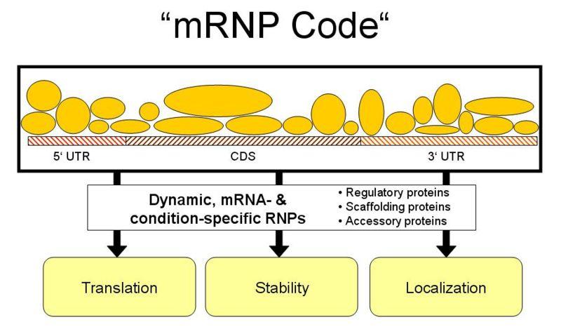 File:MRNP code.JPG
