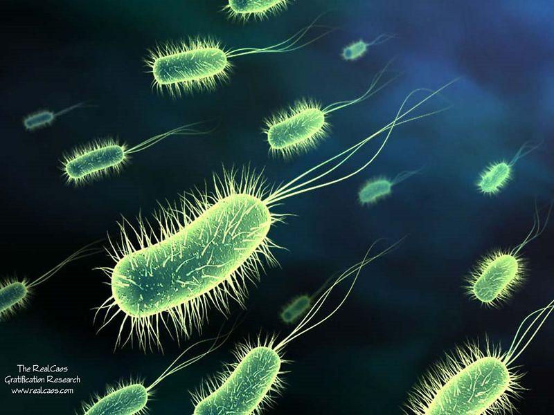 File:Bacteria.jpg