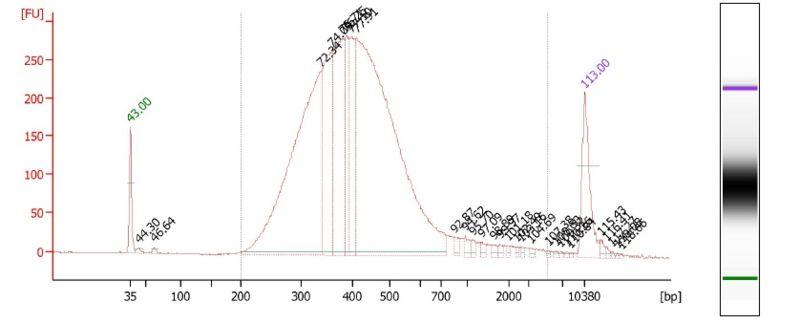 File:Sunbirds1 bioanalyzer.jpg