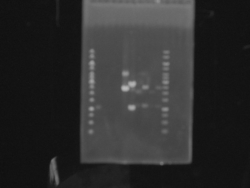 Luci PCR.JPG