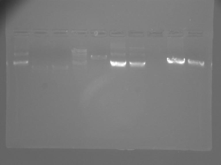 File:S12 M2D5 WF gel-Yellow.jpg