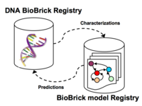 DNA & Model registries