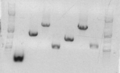 Thumbnail for version as of 16:55, 24 February 2010