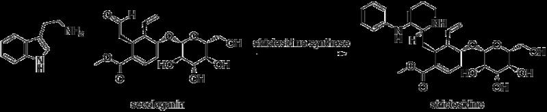 File:Strictosidine.png