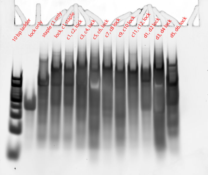 Image:Sdstaples lock conjugation 1-annotated.jpg