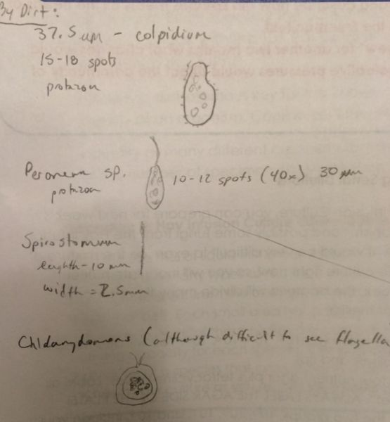 File:April Schattner - Observations by soil.jpg