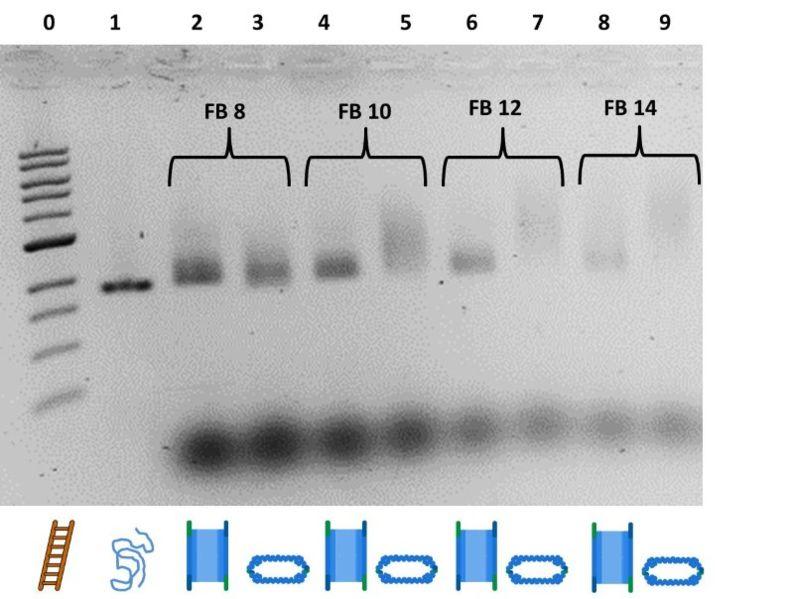 File:BM12 Nanosaurs ImageGel2.jpg