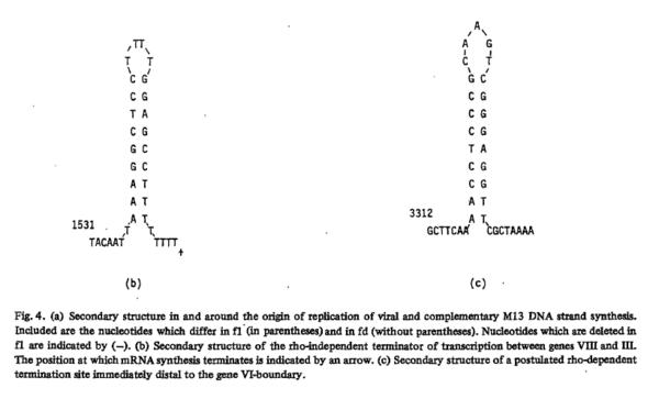 Identified transcriptional terminators
