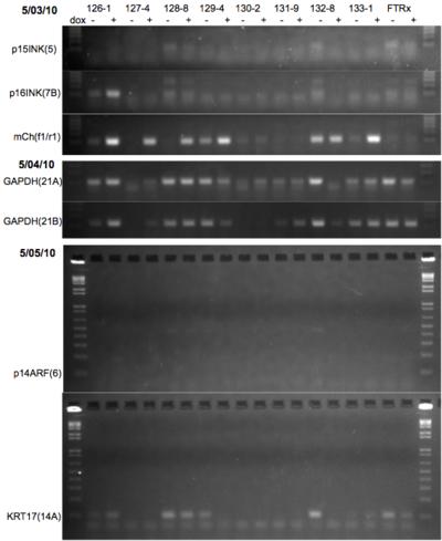 RT-PCR 5/05/10