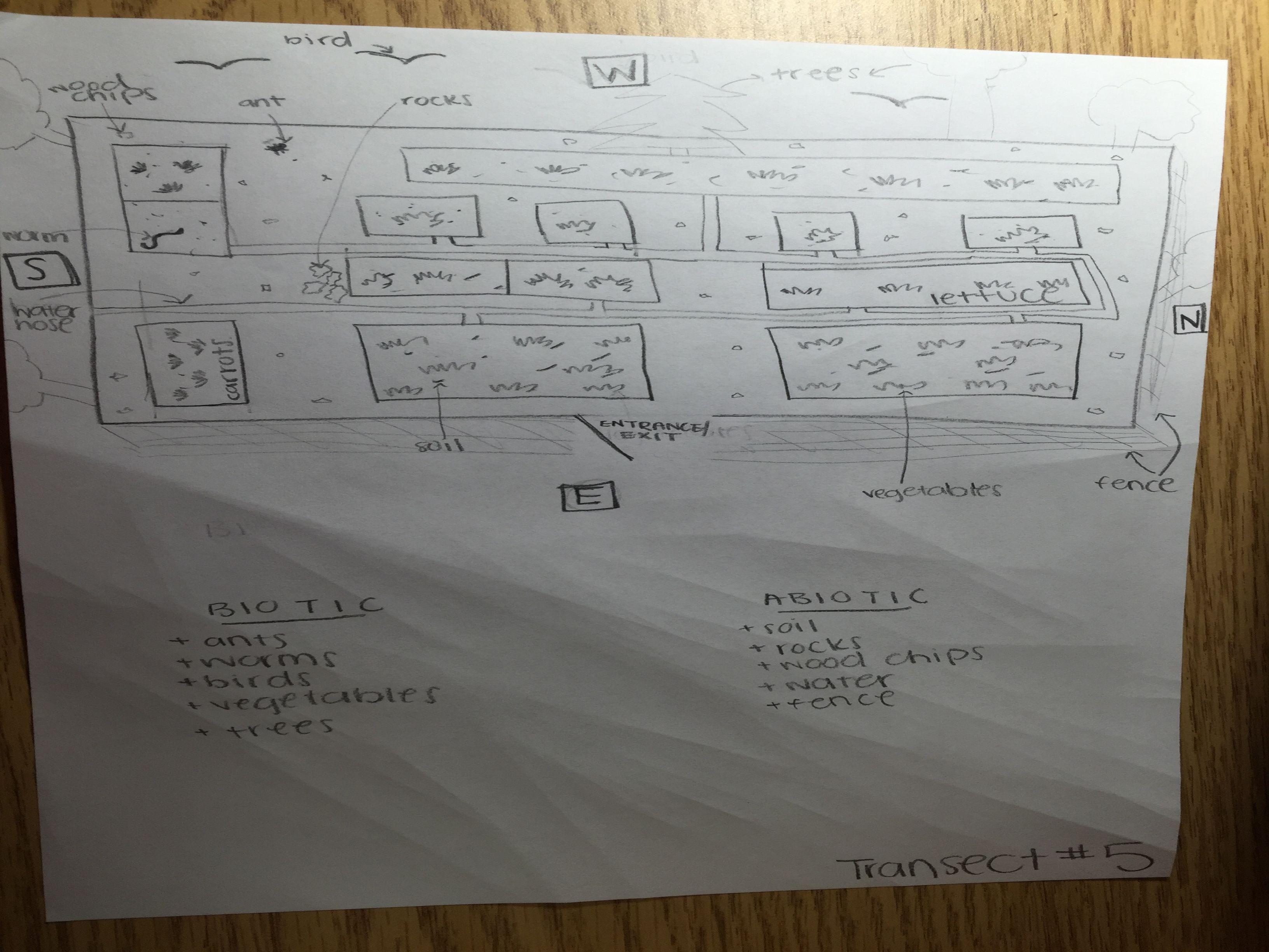 Lynda Arostegui lab 1 drawing.JPG