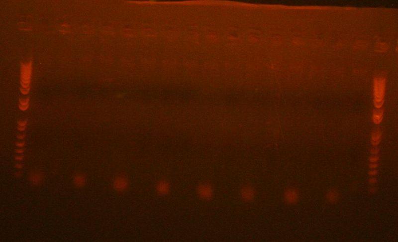 File:PCR 6-15-10.JPG