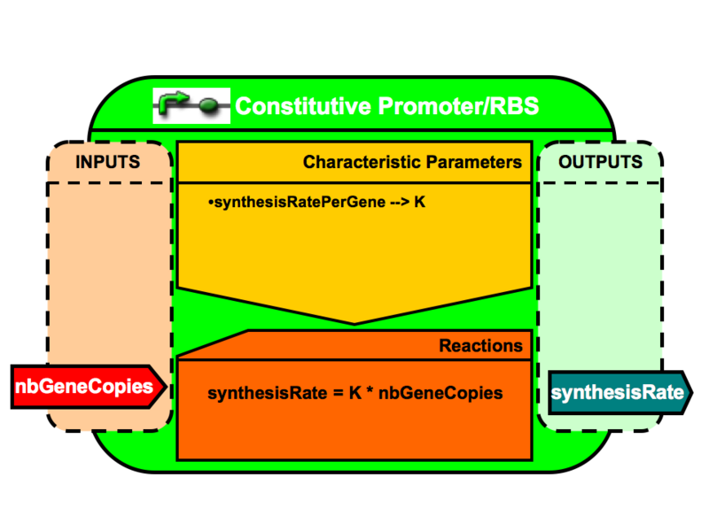 File:VBB ConstitutivePromoterRBS.png