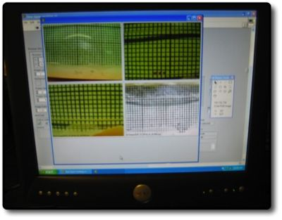 AM Tobacco Seeds-Camera Rig Software.jpg