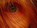 Thumbnail for version as of 08:11, 27 September 2006